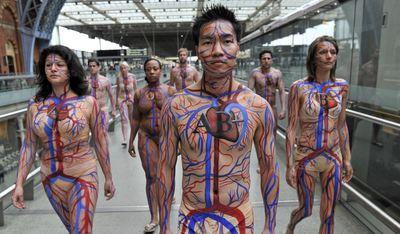 Body Artery.jpg
