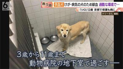 供血犬02.jpg