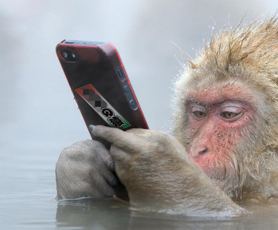ape05.jpg
