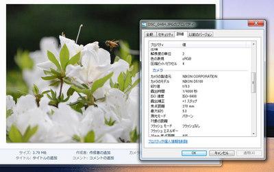 bee03-DSC_0484.jpg