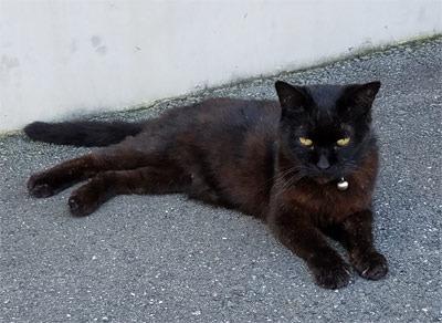 black_cat02.jpg