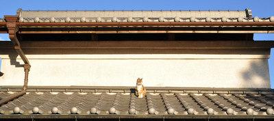cat_in_the_sun.jpg