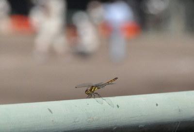 dragonfly01.jpg