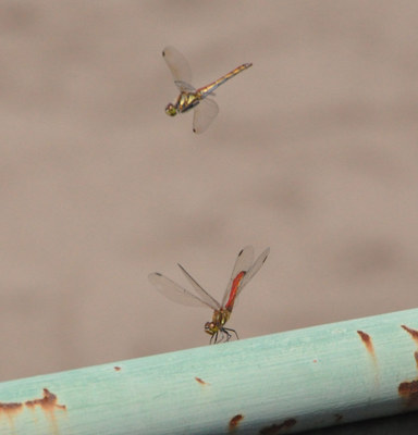 dragonfly02.jpg