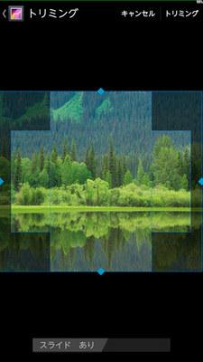 forest02.jpg
