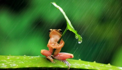 frog77.jpg
