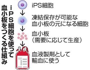 iPS細胞から血小板02.jpg