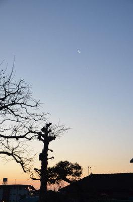 moon_venus02.jpg