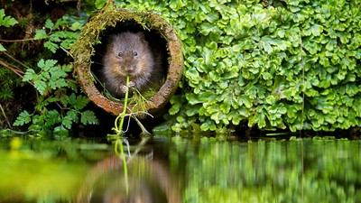 nature-plants-river-beavers-animal-1920x1080.jpg