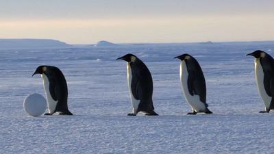 penguins_1280.jpg