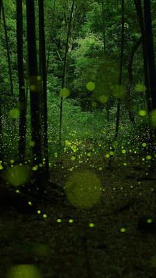 spotlight_green02.jpg