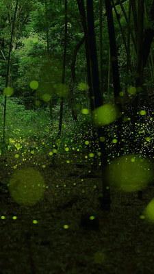 spotlight_green03.jpg