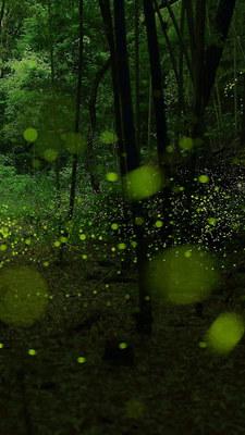 spotlight_green04.jpg