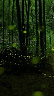 spotlight_green05.jpg