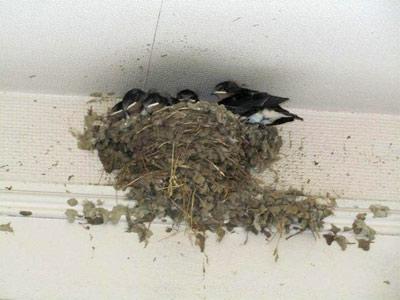 swallow04.jpg
